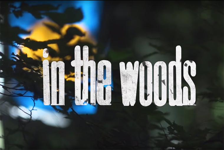 In the Woods 2013